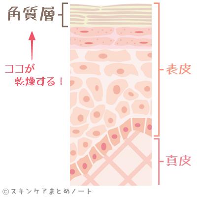 角質層の位置を示す皮膚の断面図